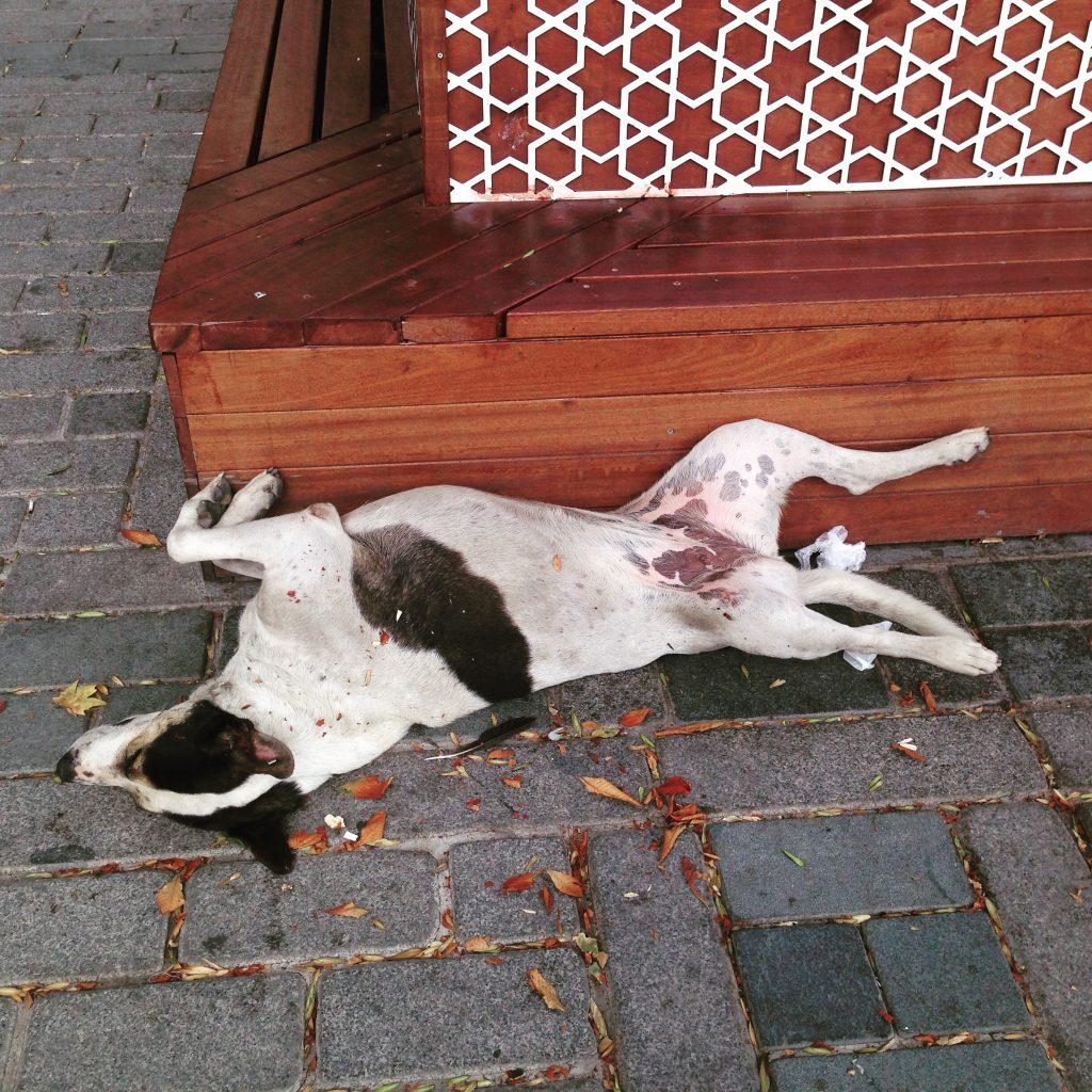 Позитивные стамбульские собаки