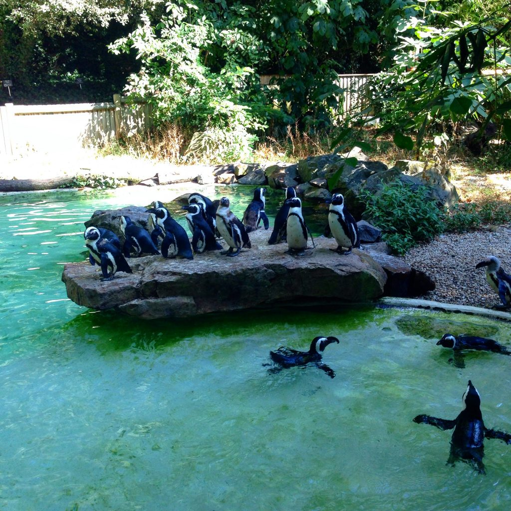 Зоопарк в Сабль д'олон