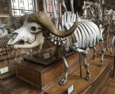 Прогуляемся по галерее сравнительной анатомии и палеонтологии
