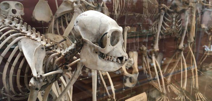 Галерея сравнительной анатомии и палеонтологии | Палеонтологический музей Парижа