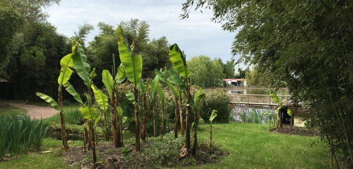 Parc Floral de la Court d'Aron | Парк цветов на побережье Атлантики
